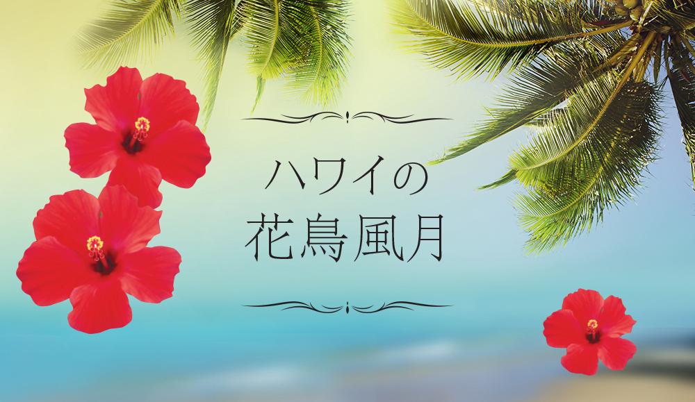 【特集記事】ハワイの花鳥風月